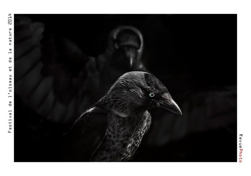 """1ER PRIX CAT """"VISION ARTISTIQUE"""" attribué à Sven-Olof AHLGREN (SUEDE) pour sa photo intitulée """"Western Jackdaw"""" Récompensé d'une dotation de 800 €"""