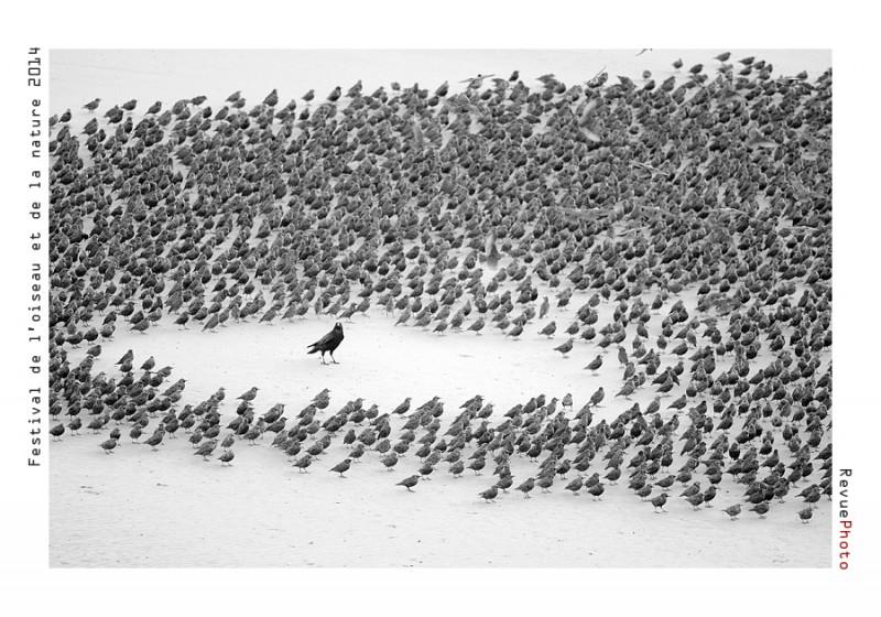 """1ER PRIX CAT """"RENCONTRES"""" attribué à Zoltan NAGY (ROUMANIE) pour sa photo intitulée """"Dominant crow"""" Récompensé d'une dotation de 800 €"""