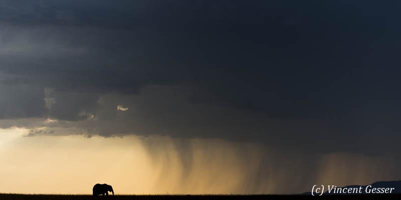 Elephant 140 _DY_8056