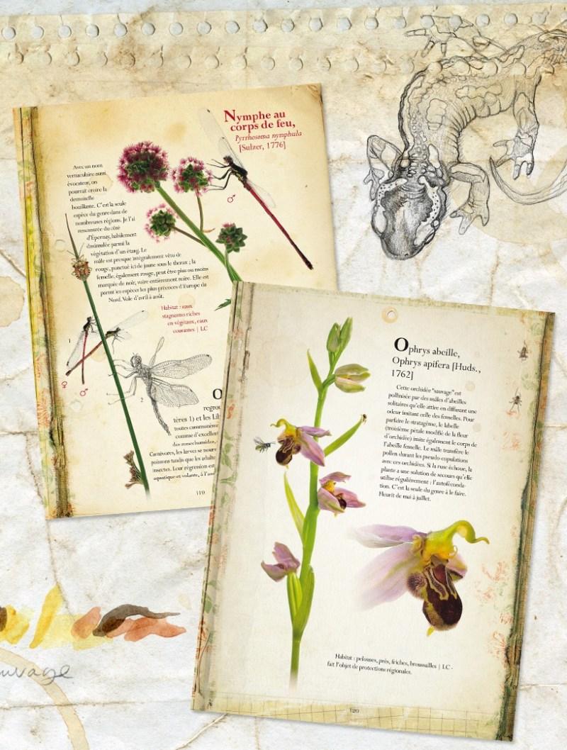 4m2 de nature - Pages intérieures