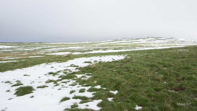 grifoul dernières neiges