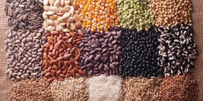 Semences agricoles: Une distribution claudicante