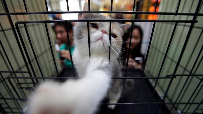 相較國外盛行領養動物,中國寵物主以購買為主要型態。 (路透社)