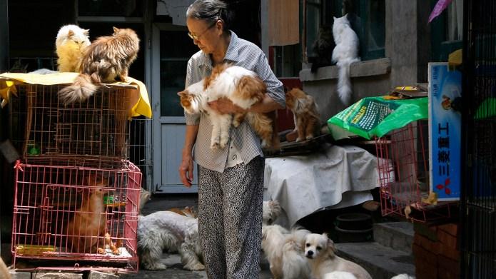 動保人士推估,中國城鎮的流浪貓少說有上億隻。 (路透社)