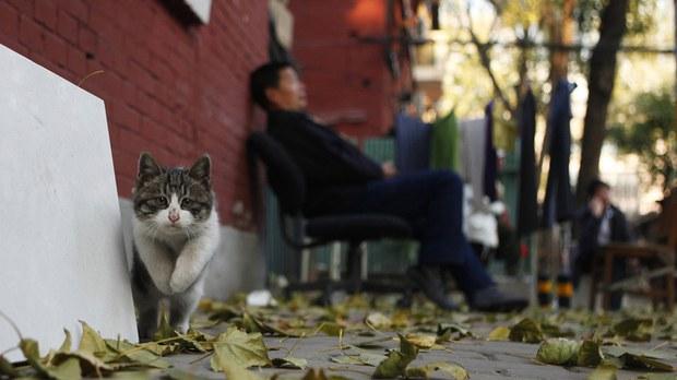 專欄| 綠色情報員:被消失的貓(下) 荒腔走板的寵物潮
