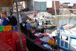 Cảng cá Kỳ Hà, Quảng Nam