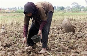 Người nông dân Việt Nam chân lấm tay bùn