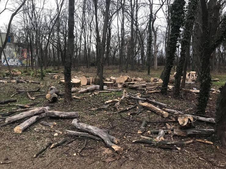 Copaci tăiați în Herăstrău (Sursa foto: Facebook/Eco-Civica)