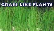 Grass Like