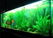 Asian Habitat for 125 Gallon Aquarium