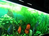 Asian Habitat for 50 - 60 Gallon Aquarium