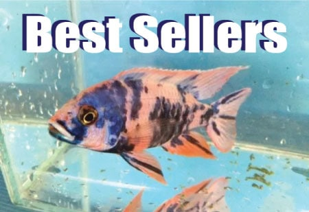 Best selling freshwater aquarium fish