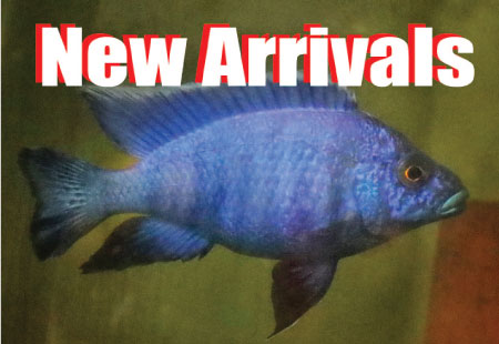 New arrivals of freshwater aquarium fish