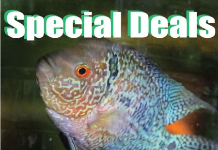 Special deals on freshwater aquarium fish