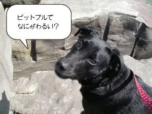 dog-statement