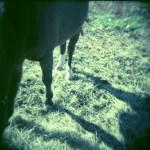 お馬さんと影