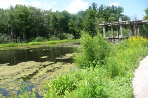 Nature Centerを囲む湿地帯。野鳥観察にも最高です。