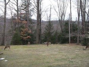 雪溶けもすっかり進み、鹿のご一行様が戻ってきました。