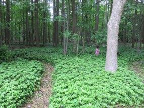 森の中にちょっとした迷路を作ってみました。