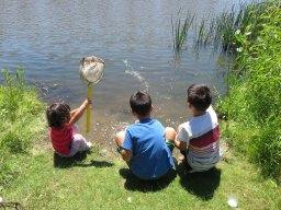 公園の池にて、自然の生き物観察ができます。