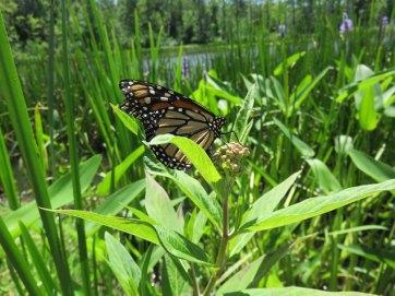 人見知りしない蝶々でした。