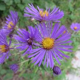 この綺麗なお花がドライブウェイに咲いてます。なんていうお花?