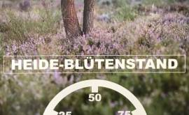 Tourist-Info Heidebarometer