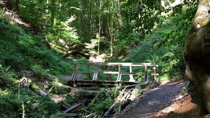 Holzbrücke im Tretschbachtal