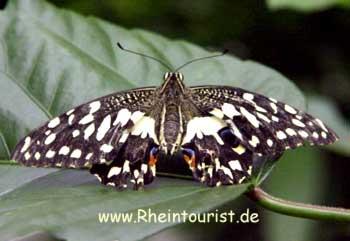 Garten Der Schmetterlinge Schloß Sayn Der Romantische Rhein