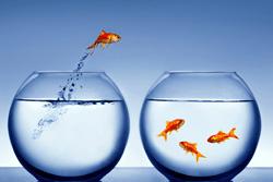 KM-Goldfish