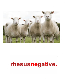 """Were the Neanderthals rh negative?"" Sheepish"