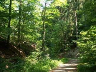 Einsiedlertal, Siebengebirge, Bad Honnef