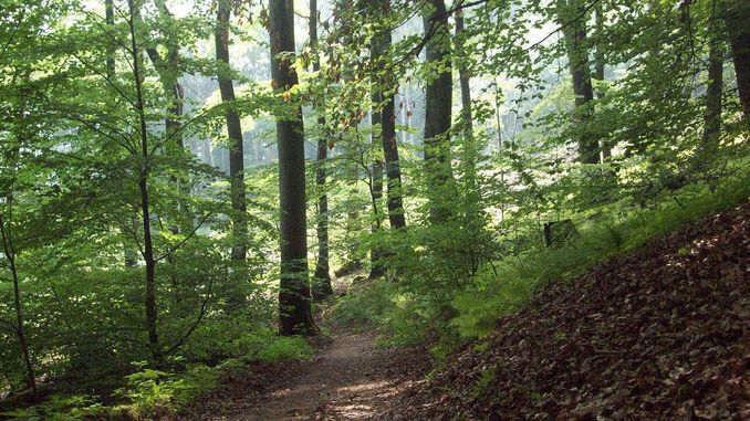 Nonnenstromberg, Siebengebirge, Königswinter