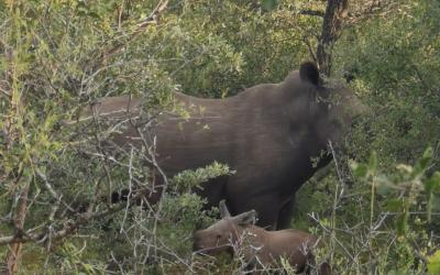 Congrats Mama Rhino – This is why we do what we do