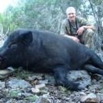 Rhino Wild Boar