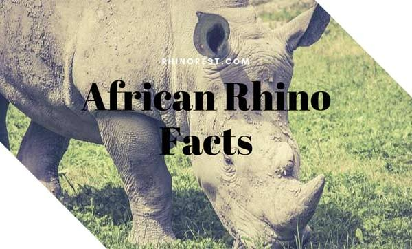 African Rhino Facts – Why is the Black Rhino Important?