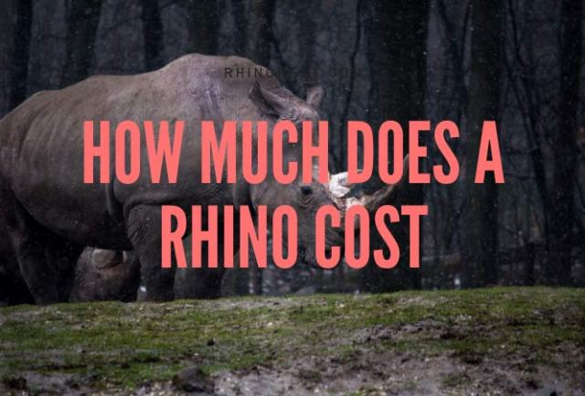 how much does a rhino cost