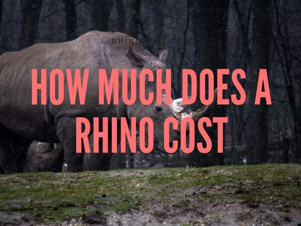 How much does a Rhino Cost?