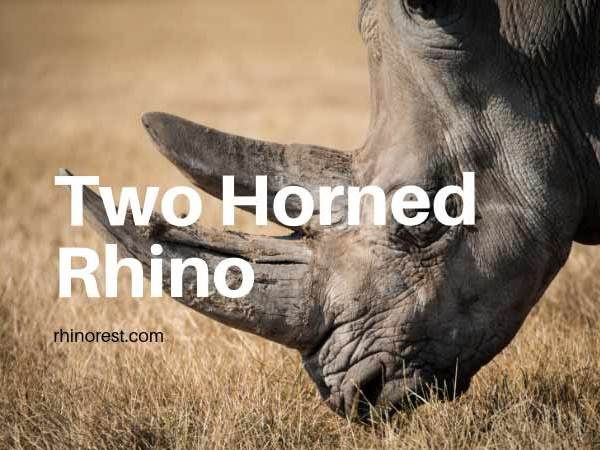Two Horned Rhino – Do all Rhinos have 2 Horns?