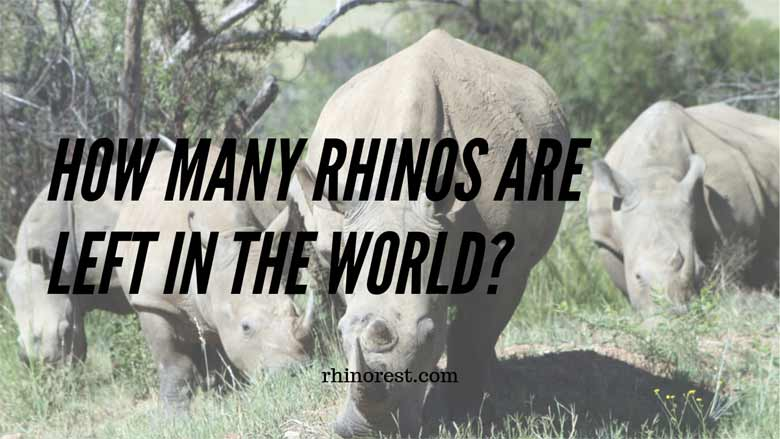 How Many Rhinos are Left in the World?