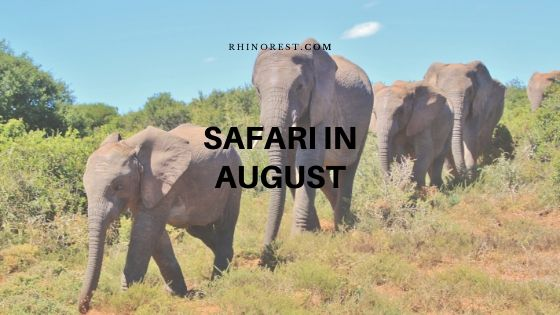 Does a Safari in August Bring Much Adventure?