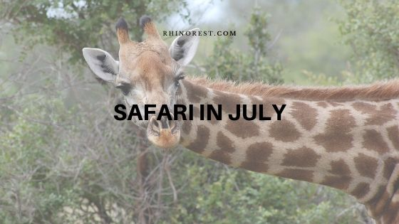 How Far Safari in July Different from other Seasons?