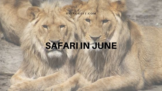 This is Why You Should Plan a Safari in June
