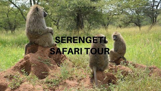 Serengeti Safari Tour – Experienced from a Traveler