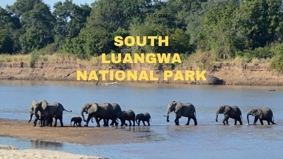 South Luangwa National Park Travel Plan
