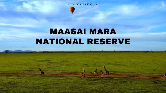 Maasai Mara National Reserve Kenya – Wildlife | Safari