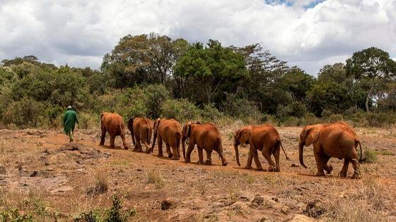 Elephant Orphanage Nairobi – Sheldrick Wildlife Trust