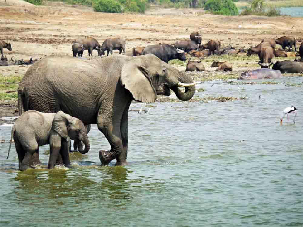 Queen Elizabeth National Park – Wildlife   Biodiversity   Travel