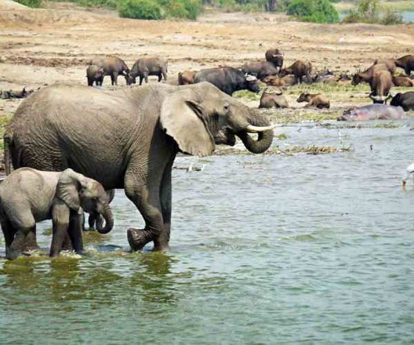 Queen Elizabeth National Park – Wildlife | Biodiversity | Travel