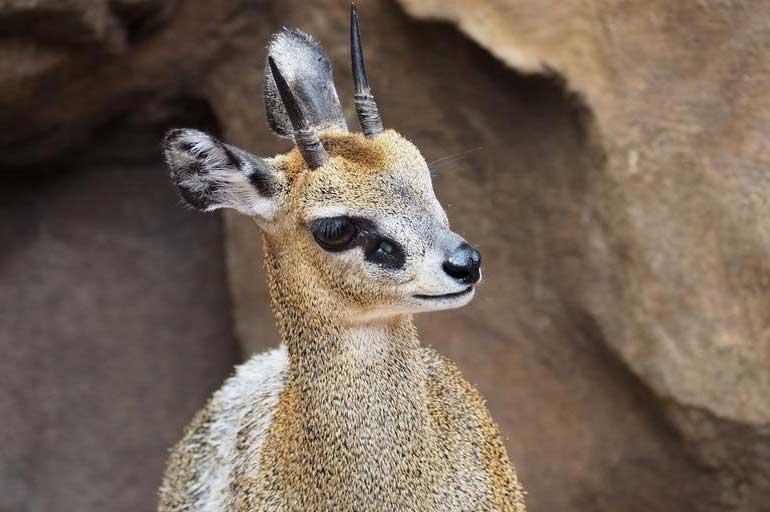 200+ Native African Animals – Biodiversity | Ecosystem | Conservation